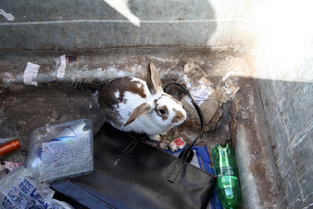 Abandoned Bunny of London